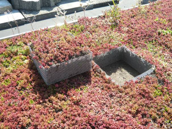 planning certainty for green roofs